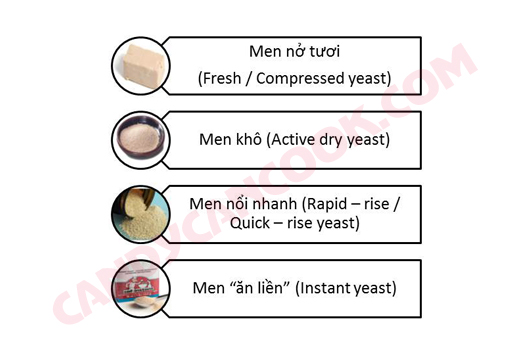 Các loại men nở thông dụng (yeast)
