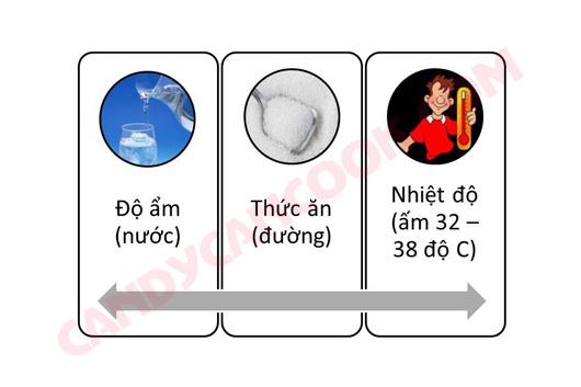 3 điều kiện để men nở (yeast) hoạt động tốt nhất