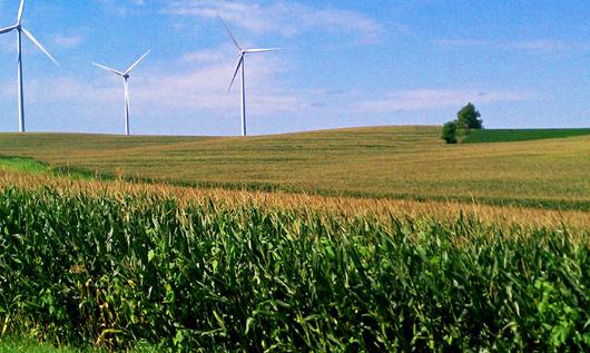 Cánh đồng ngo trải dài rộng lơn - Bang Nebraska