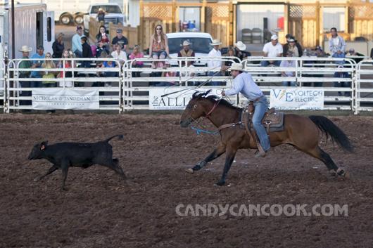 Kĩ thật cưỡi ngựa đang được thể hiện qua màn bắt bò rừng :D