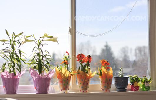 Mùa xuân bên cửa sổ :D