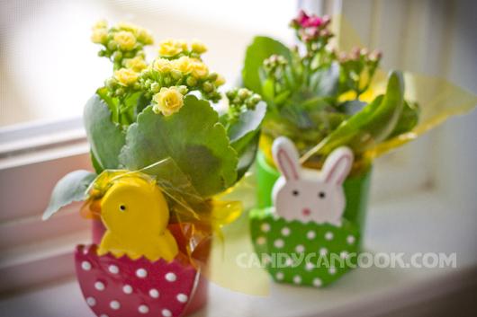 Niềm vui sung sướng khi nhìn thấy những cây hoa on sales :P