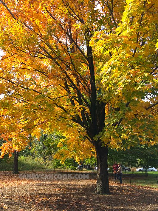 Một buổi sáng thu trong lành ở Central Park