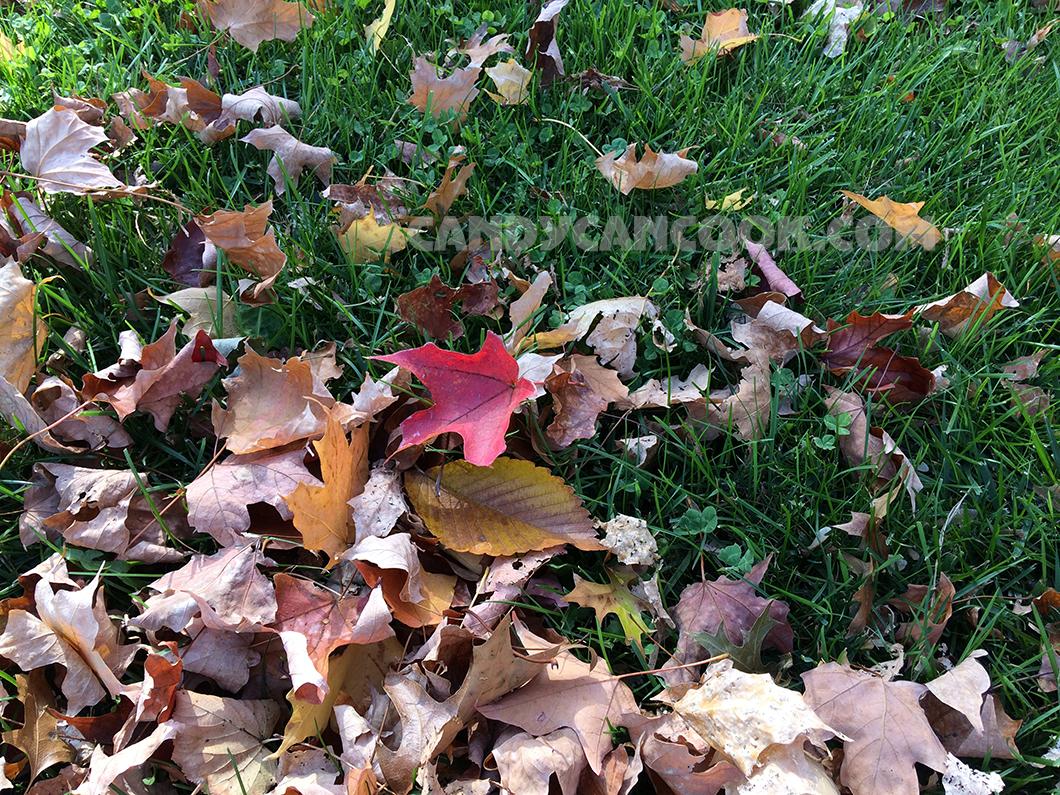 Sắc đỏ của lá phong - đặc trưng thu của bờ Đông nước Mỹ