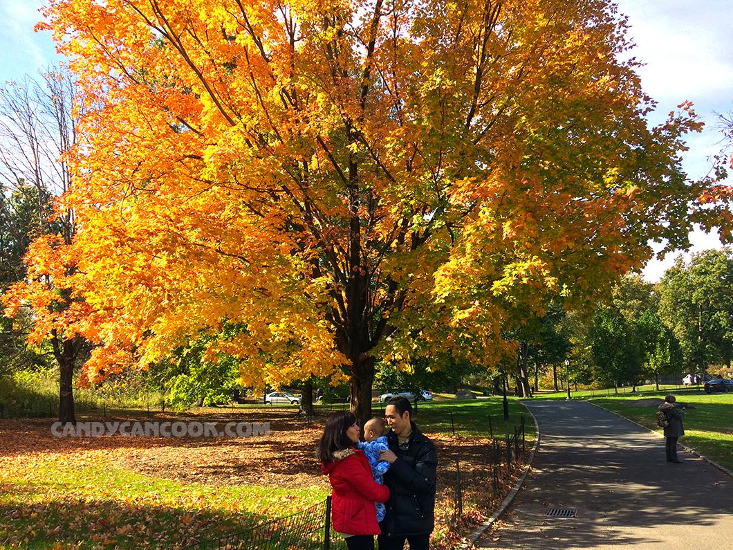 Gia đình nhỏ dưới bóng cây rực rỡ sắc thu
