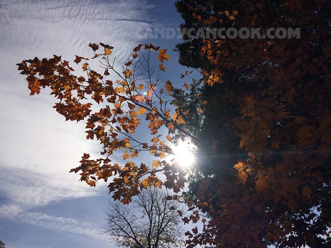 Ánh nắng đẹp xuyên qua lá thu càng làm tăng sắc thu rực rỡ